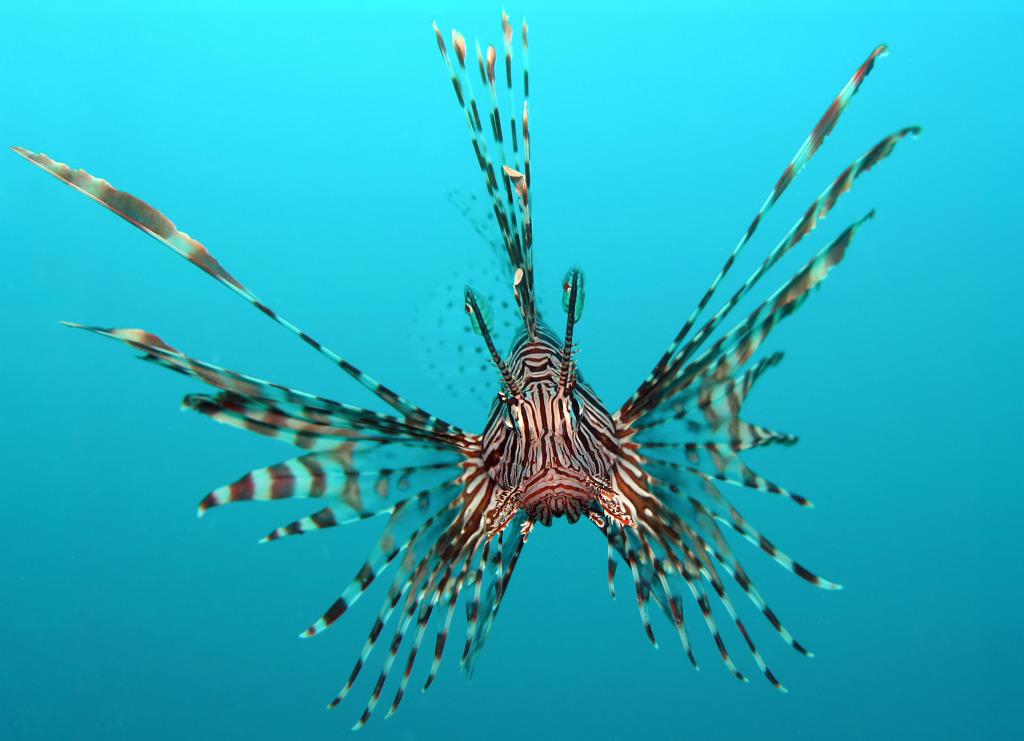 fish 1024x741 fish