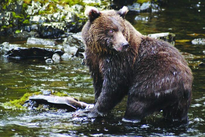 Bear Anan Creek USFS Bear, Anan Creek, USFS