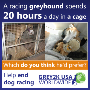 A racing greyhound spends 20 hours a day in a cage. Help end dog racing. Grey2K USA Worldwide