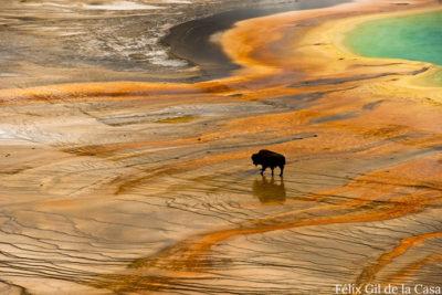 W FelixGilDeLaCasa Yellowstone 1 1 400x267 Interview: Lisa Fimiani of The G2 Gallery