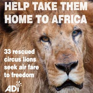 Animal Defense International: Give Today!