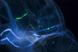 b740e2a31605d49d2d8212ef7d7018e9 1 bioluminescence
