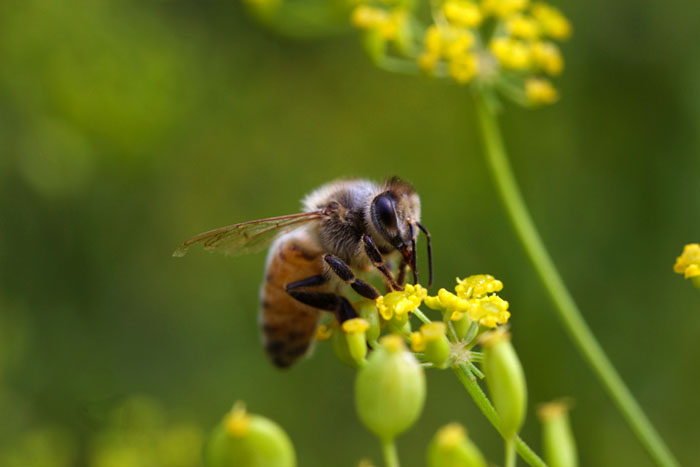 The Coming Bee-Pocalypse? Collateral Damage of Mosquito Spraying