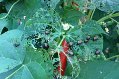 bugs 400x267 6 DIY Eco Friendly Pest Control Tips