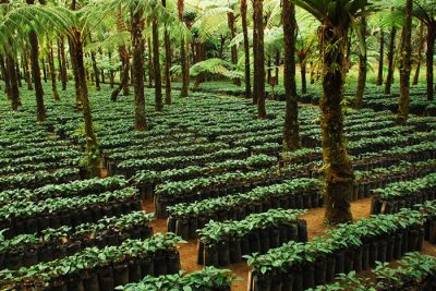 certified coffee farm 400x267 EarthTalk: Questions & Answers About Our Environment