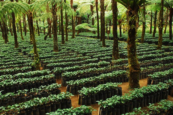 certified coffee farm 700x467 EarthTalk: Questions & Answers About Our Environment