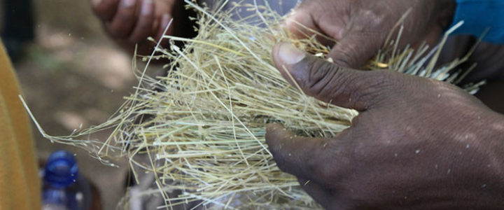 Developing Crops Resistant to Climate Change Effects